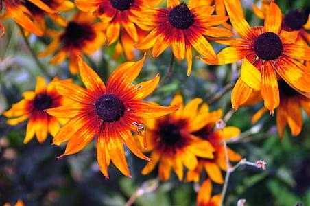 oranž, lilled, loodus, õie, suvel, õis, kevadel