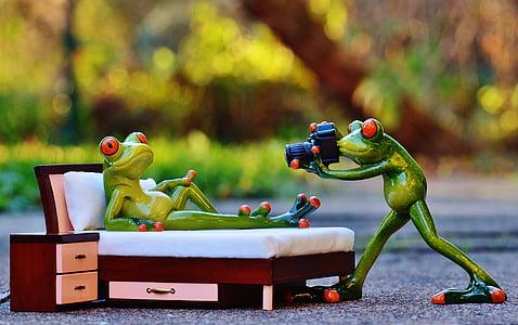 фотограф, жаба, фотосесия, Смешно, камера, забавно, животните