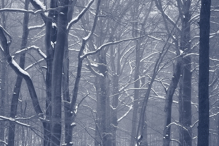 forest, winter, snow, trees, winter forest, tree trunks