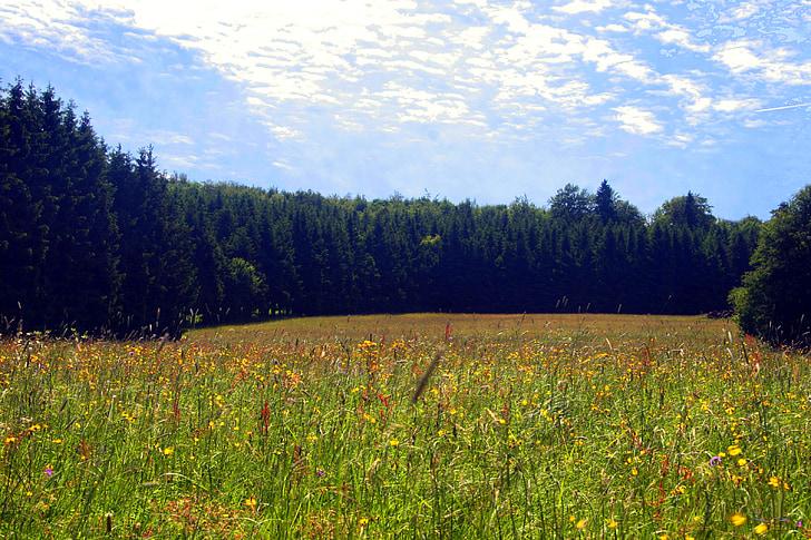 spring meadow, flower meadow, wild flowers, spring, meadow, wildflowers, rhön meadow
