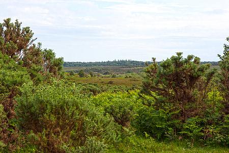 maastik, Vaade, Vista, Suvine maastik, loodus, maastik, maastik, looduse ilu