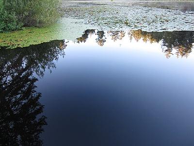 Lake, Lily, heijastus, vesi, sileä, Victoria, Brittiläinen Kolumbia