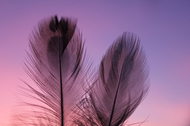plumule, feathers, feather, pen, subtlety, fine pen, nature