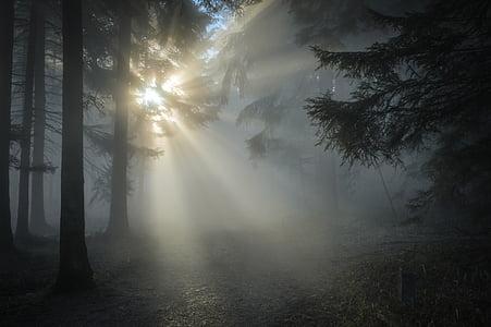 sol de inverno, sol, Então, raio de sol, pôr do sol, luz de volta, natureza