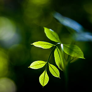 plant, leaves, green, nature, leaf, foliage, green leaves