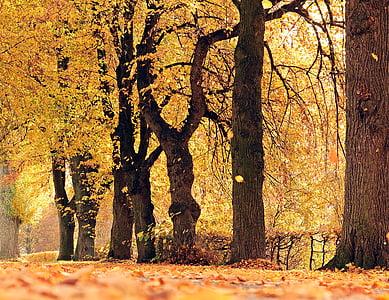 drzewa, Avenue, jesień, od, nastrój, odkryty, jesienią liście