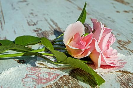 Rosa, rosa Rosa, flors roses, Rosa, flor rosa, flor, Romanç