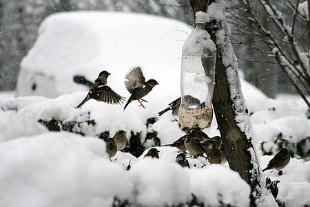 nature, bird, sparrow, winter, feeding, bird feeder, mag