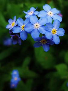 flor, flors, natura, blau, violeta, verd, planta