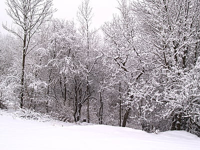 wintry, winter, snow, winer, forest, periwinkle, christmas tree