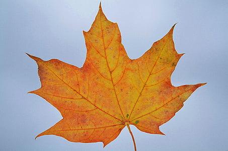 leaf, nature, garden, macro, detail, plants, beautiful