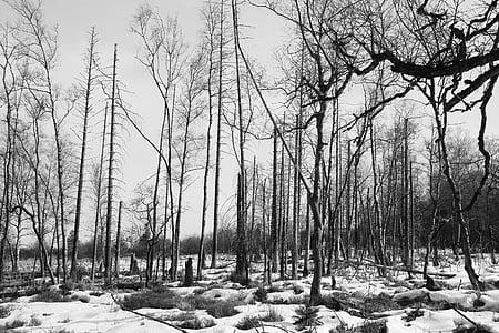bosc, arbres, waldsterben, mort vegetal, estat d'ànim, ombrívol, trist