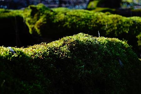 point de riz, Forest, troncs d'arbres, bemoost, vert, souche d'arbre, mystique