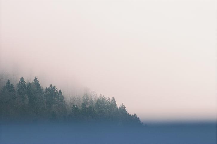 photo, fog, green, trees, sky, nature, tranquil scene