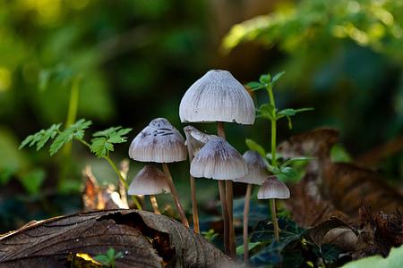 sponge, forest floor, autumn, natural, forest, denmark, light