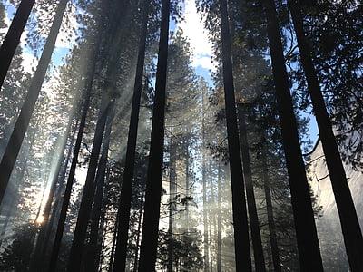 hmla, Forest, Príroda, silueta, Sky, lúčov, kmene stromov