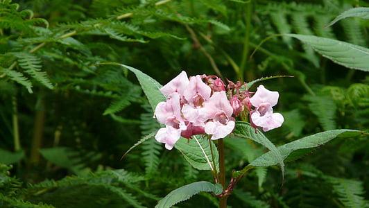 flower, wild flowers, pink