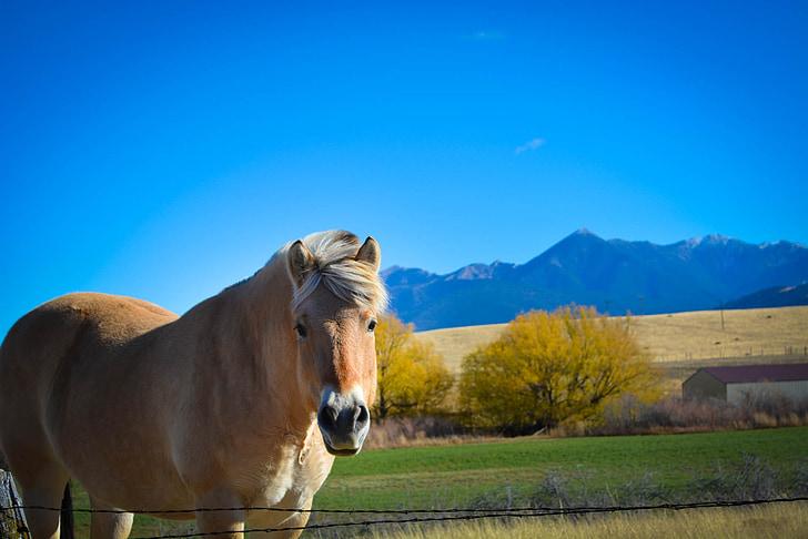 Montana, cavall, Serra, país de Montana