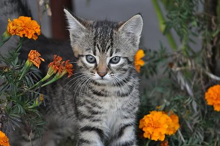 animals, kitten, a young kitten, animal, charming, fur, little kitty