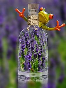 laventeli, pullo, sammakko, Hassu, kasvi, kevään, violetti