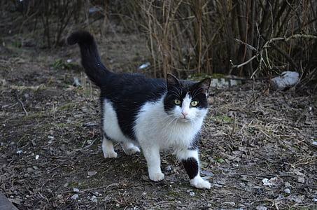 Katze, Tiere, Natur, schwarze Katze, weiße Katze, flauschige Katze, Augen