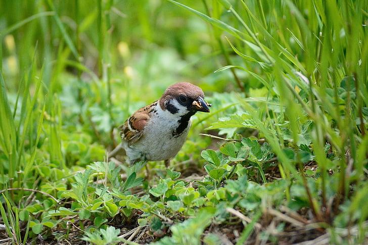 bird, nature, beak