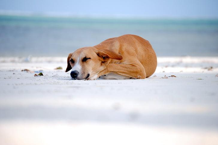 dog, sleeping dog, sleeping, animal, one animal, sea, beach