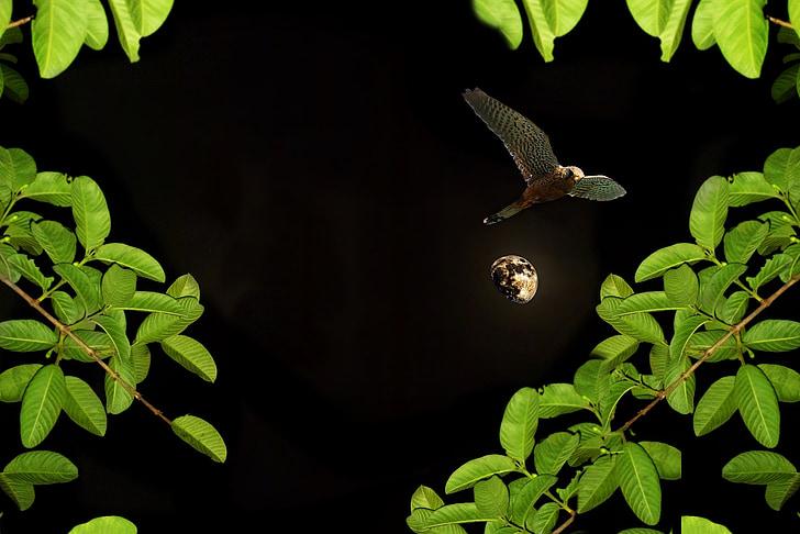 Луната, нощ, птици, растителна, растителност, Градина, природата