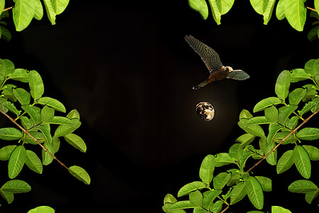 moon, night, birds, plant, vegetation, garden, nature