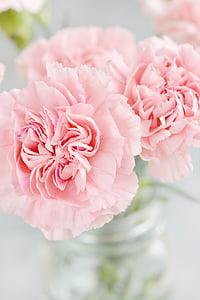 claus d'espècia, flors, pètals, Rosa, schnittblume, Gerro, tancar