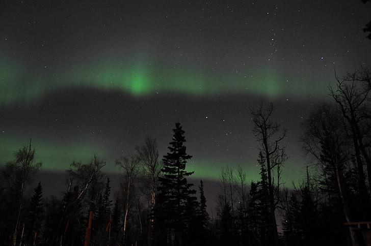 northern, sky, lights, stars, magic, aurora, north pole