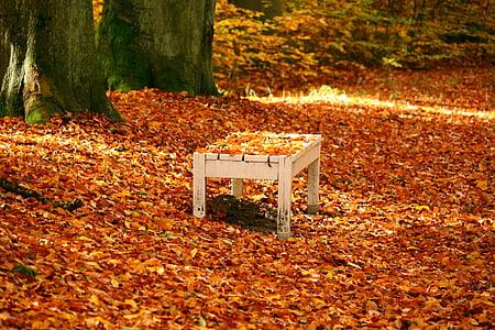banka, Sonbahar, sonbahar yaprakları, yaprakları, Altın sonbahar, sonbahar altın, renkli
