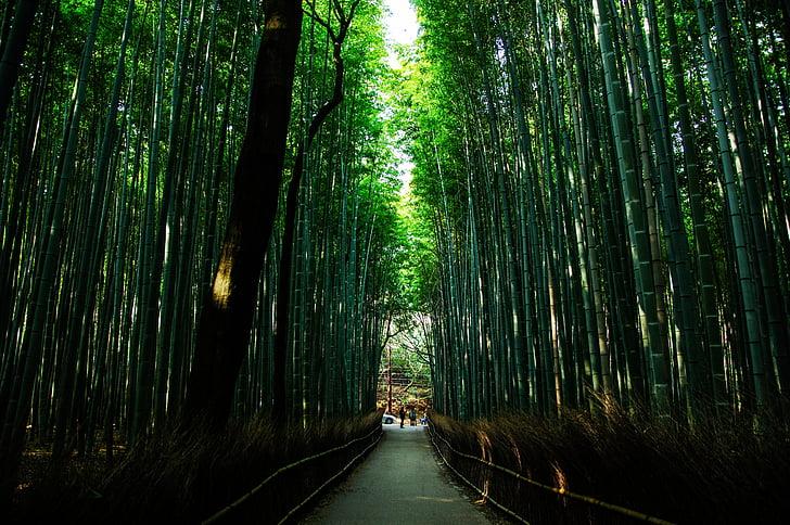 Киото, Япония, естествени, бамбук, Грийн, бамбукова гора, някои вкус