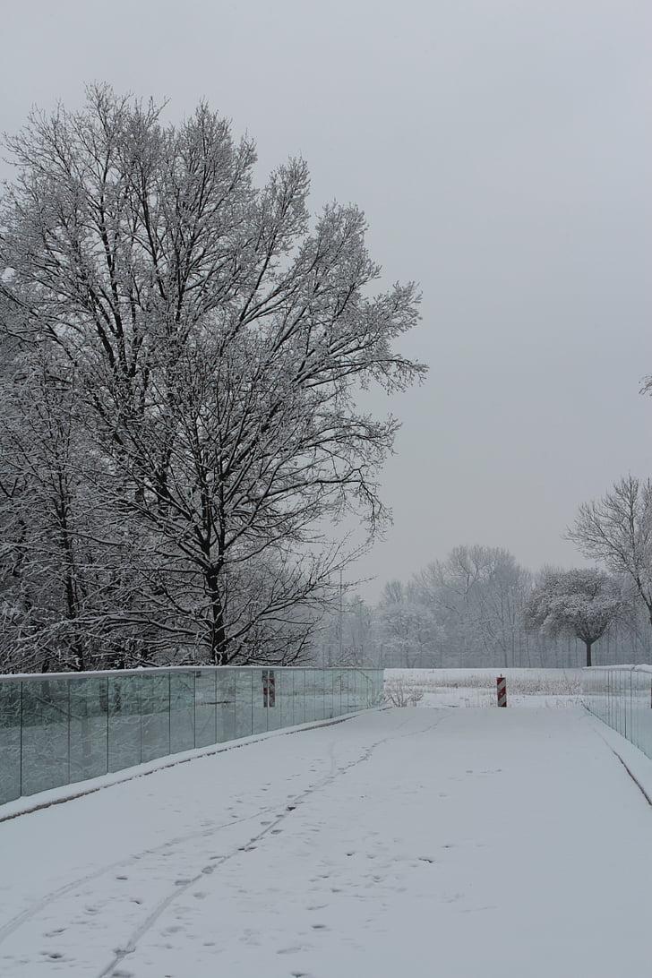 pozimi, stran, bela, sneg, dreves, narave, hladno