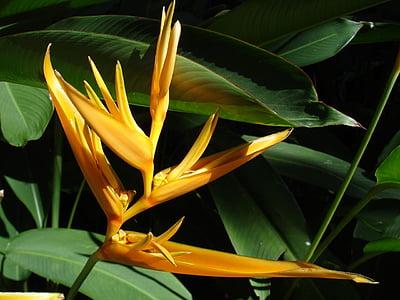 flower, bird, paradise, plant, nature, garden