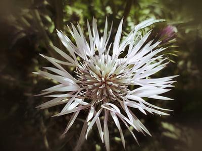 flower, wild, wild flower, nature, field, spring