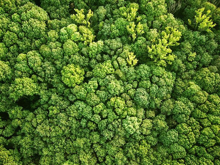 เบิร์ดอายวิว, ป่า, มุมมองทางอากาศ, ธรรมชาติ, สีเขียว, ต้นไม้, ภูมิทัศน์