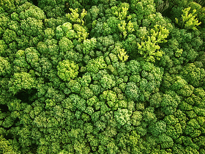 vista panorâmica, floresta, Vista aérea, natureza, verde, árvores, paisagem