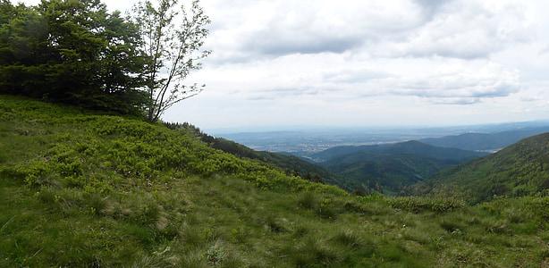 rừng đen, Hill, Thung lũng Rhine, địa danh Schauinsland, mùa hè, đi bộ đường dài