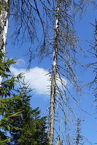 waldsterben naturalesa, arbres, oberharz, o estany, protecció del medi ambient, trencat, sensible