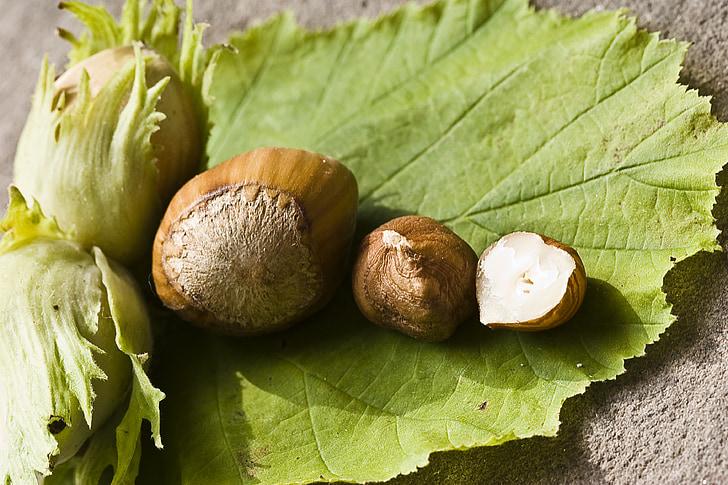 nut, hazelnut, green, eat, food, shell, walnut collection