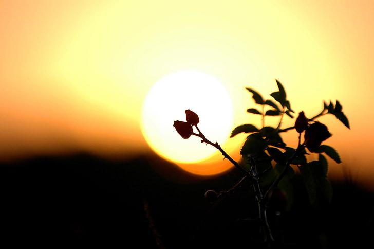 Bush, Dawn, Sunrise, taevas, Daybreak, loodus, hommikul valgus