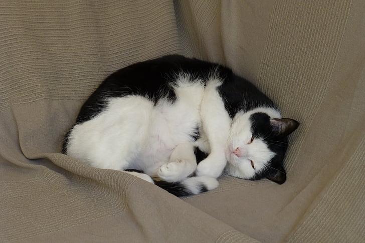 gats, son, animal de companyia