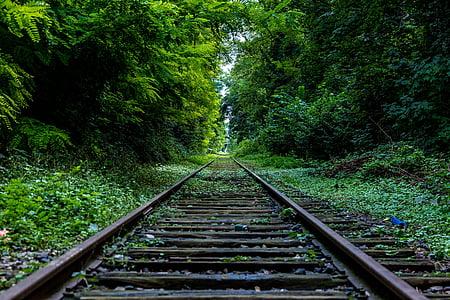 forlatt, skog, industri, natur, overgrodd, jernbanen, skinnene