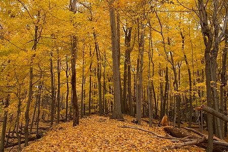 Sonbahar, Sonbahar, Sarı, Sezon, yaprak, yaprakları, yeşillik