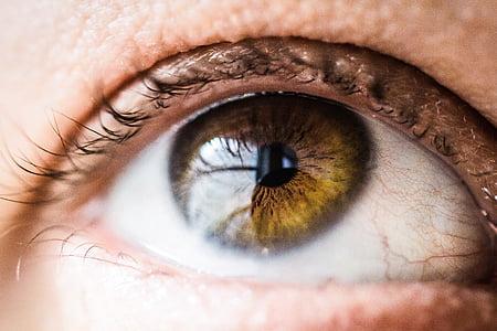 beautiful, close-up, eye, eyeball, eyebrow, eyelash, eyelid