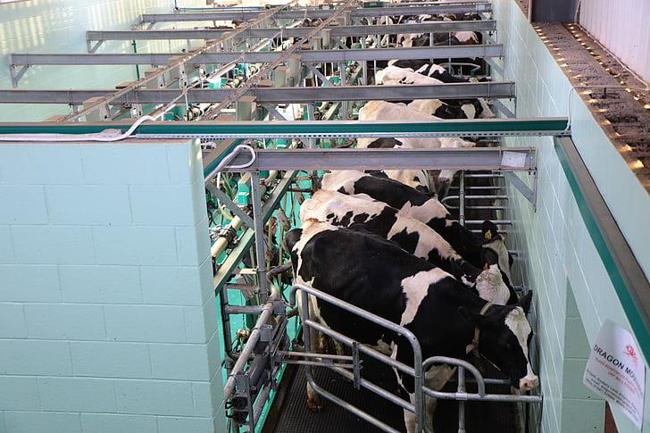 munyir, saló, moderna, llet, productes lactis, saló, equips