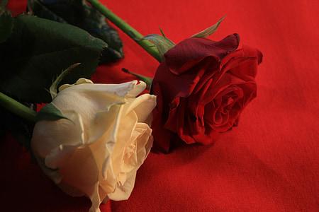 ruža, ljubav, Sreća, Hvala ti, festivala, flore, Pozdrav