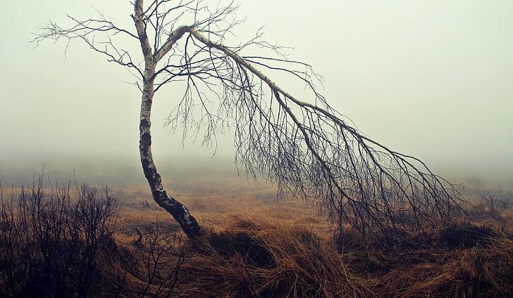 fog, moor, moorland, birch, tree, mood, autumn