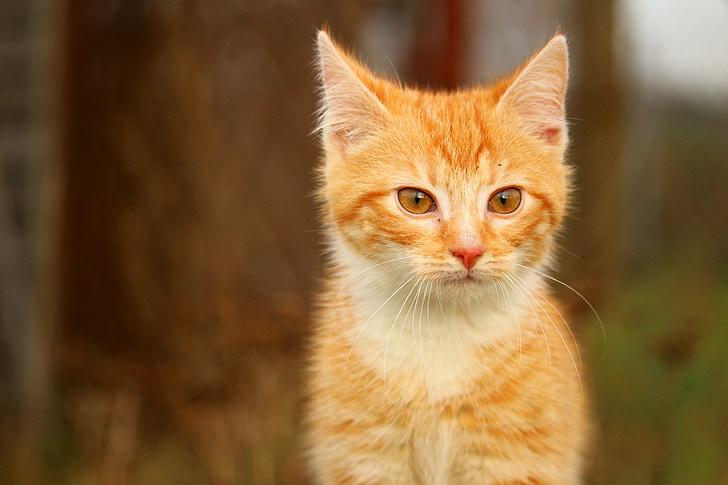sexy dospívající kočička vids